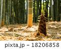 洛西の筍 18206858