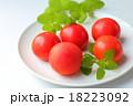 トマト 18223092