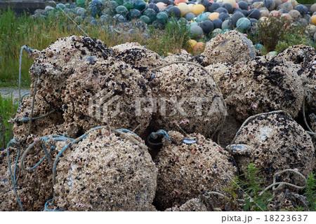 貝殻が付着した養殖カキ用の浮き玉(津軽半島, 青森県) 18223637