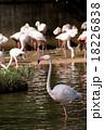 水鳥 水浴び 鳥の写真 18226838