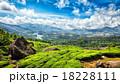 茶畑 お茶 茶の写真 18228111