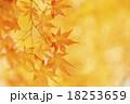 秋イメージ 18253659
