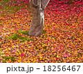 落ち葉 紅葉 植物の写真 18256467