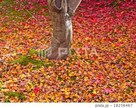 東福寺境内の散り紅葉 18256467