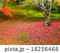 紅葉 植物 秋の写真 18256468