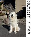 犬 18261790