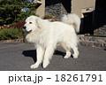 犬 18261791
