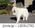 犬 18261792