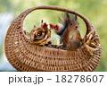 リス りす 栗鼠の写真 18278607