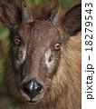 日本羚羊アップ 18279543