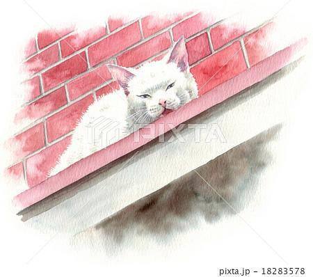 庇の上から何か言っている白いネコ 18283578
