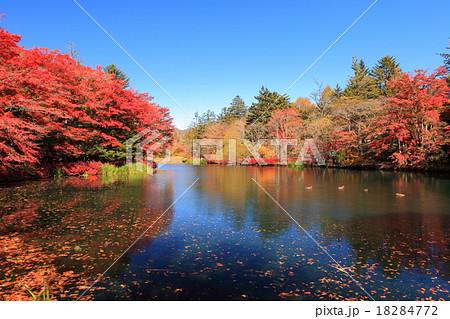 雲場池 紅葉 18284772