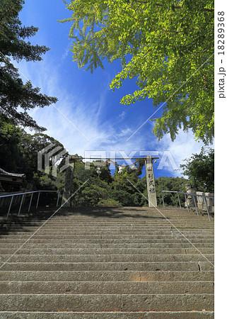 愛媛県宇和島市「和霊神社」御神木の銀杏から本殿へと向かう石段 18289368