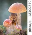 リス りす 栗鼠の写真 18300240