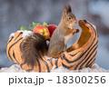 リス りす 栗鼠の写真 18300256