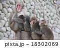 猿 18302069