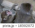 猿 18302072