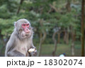 猿 18302074