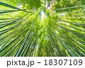 静寂の竹林 18307109