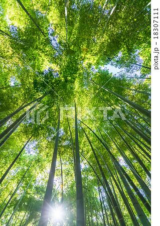 静寂の竹林 18307111