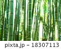 竹林 竹 青竹の写真 18307113