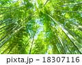 竹林 竹 青竹の写真 18307116