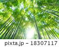 竹林 竹 青竹の写真 18307117