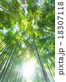 静寂の竹林 18307118