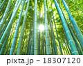 静寂の竹林 18307120