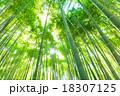 竹林 竹 青竹の写真 18307125