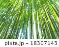 竹林 竹 青竹の写真 18307143