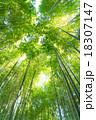 静寂の竹林 18307147