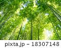 竹林 竹 青竹の写真 18307148