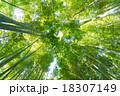 竹林 竹 青竹の写真 18307149
