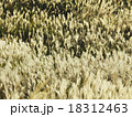 すすき 秋 野草 18312463