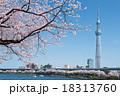 桜とスカイツリー 18313760