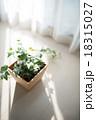 観葉植物 18315027