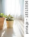 観葉植物 18315036