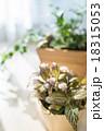観葉植物 18315053