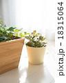 観葉植物 18315064