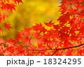 赤い紅葉の紅葉 18324295