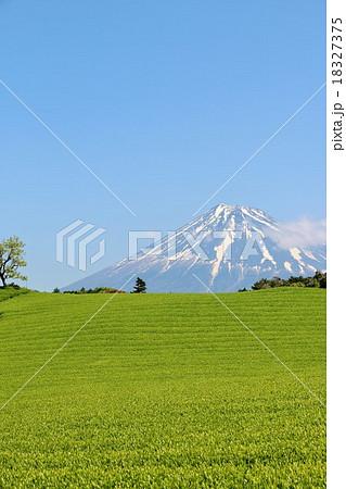 新緑の茶畑と富士山 18327375