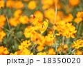 コスモス 秋桜 花の写真 18350020