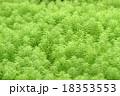 草 18353553