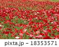 ポピー 18353571