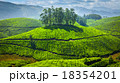 茶畑 お茶 茶の写真 18354201