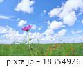 爽やかな空と一輪のコスモス 18354926