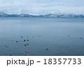 湖 鳥 白鳥の写真 18357733