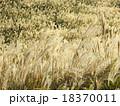 すすき 野草 秋の写真 18370011