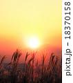 すすき 野草 秋の写真 18370158